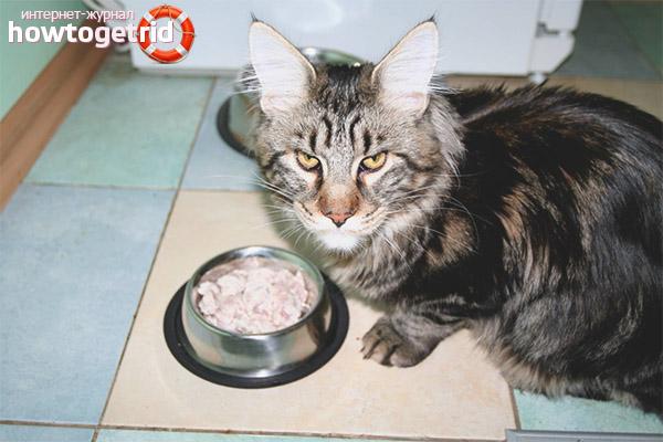 Чем кормить породу кошек мейн-кун