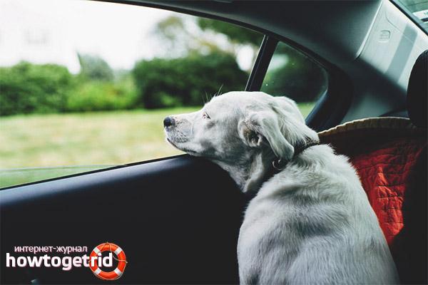 Как избавиться от укачивания собаки в машине