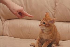 Как правильно наказать кота или кошку