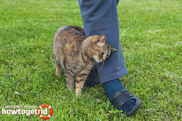 Почему кошки трутся об ноги людей