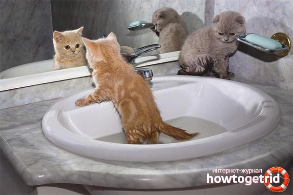 С какого возраста можно купать котят