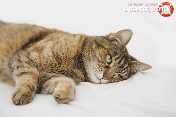 Заболевания, вызывающие судороги у кошки