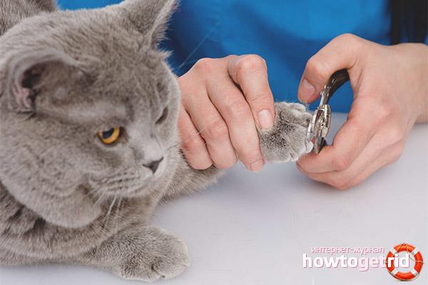 Инструменты для стрижки когтей кошке