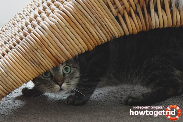 Как адаптировать кота к новому дому