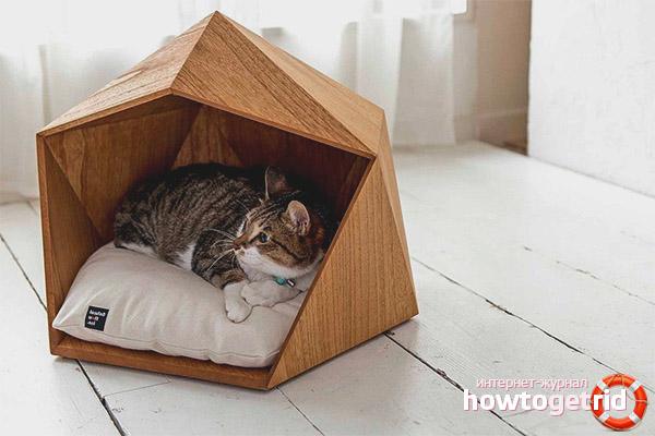 Как приучить кошку или кота к домику