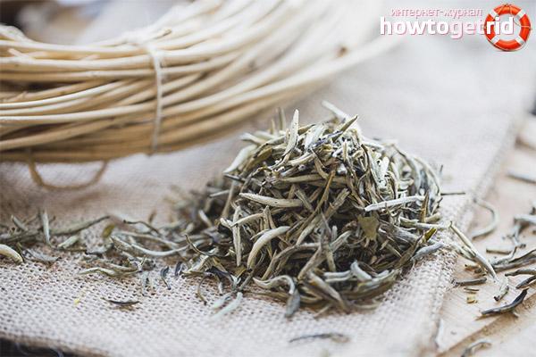 Как выбрать хороший белый чай