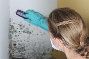Как вывести плесень со стен в квартире