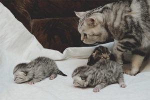 Когда котенка можно забирать от кошки