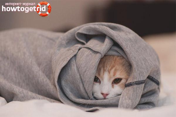 Кошка дрожит от холода
