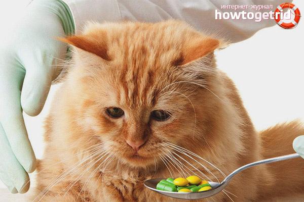 Кот постоянно чешется и вылизывается