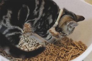 Котёнок ест наполнитель для туалета