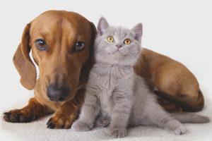 Кто лучше кот или собака