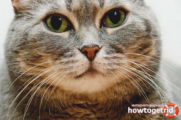 Может ли кот жить без усов