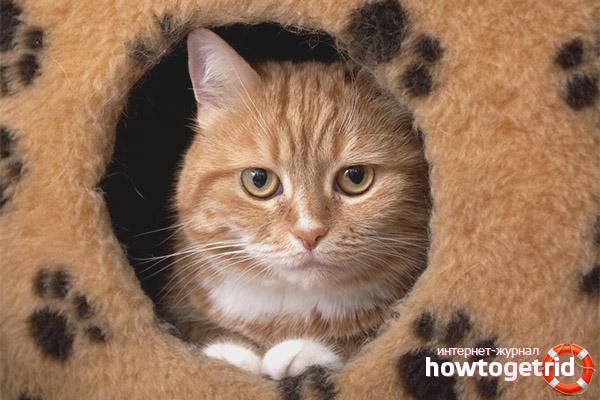 Основные способы приучения кота к домику