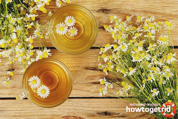 Особенности заготовки ромашкового чая