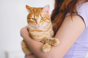 Почему кошка не любит сидеть на руках