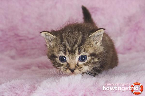 Помогаем котенку привыкать к новому месту