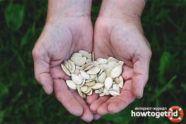 Семена тыквы при простатите