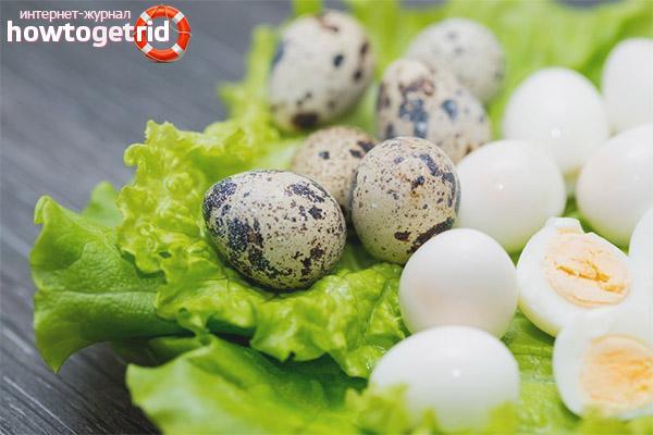 Способы употребления перепелиных яиц при гастрите