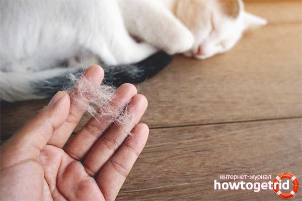 Способы устранения линьки у кошек