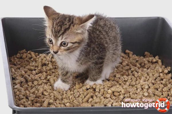 Вредно ли для кота грызть наполнитель лотка