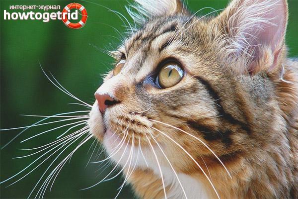 Зачем кошке и коту нужны усы