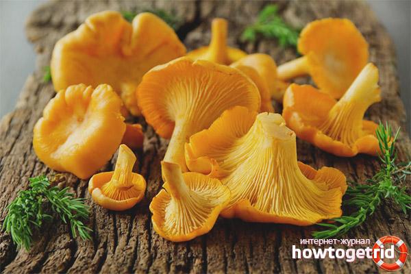 Чем полезны грибы лисички