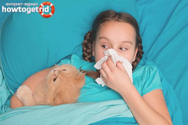 Как бороться с аллергией у ребенка на животных