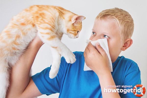 Как проявляется аллергия на кошек у ребенка