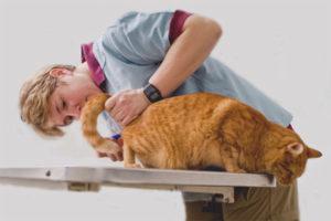 Как сделать клизму коту