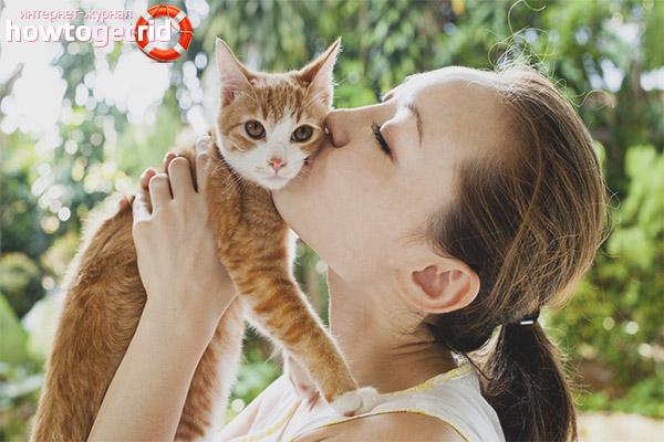 Почему нельзя целовать кошек
