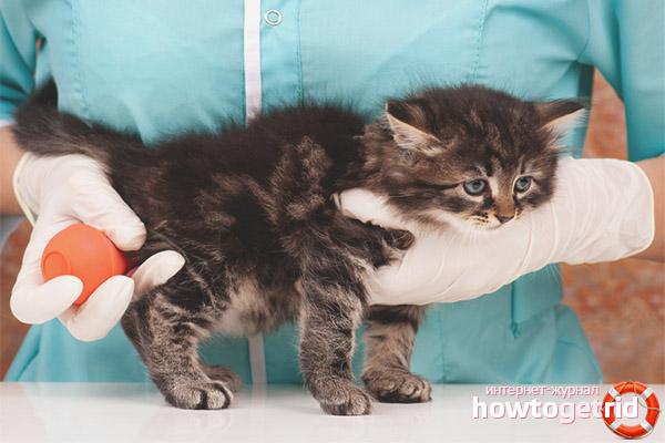 Процедура использования клизмы коту