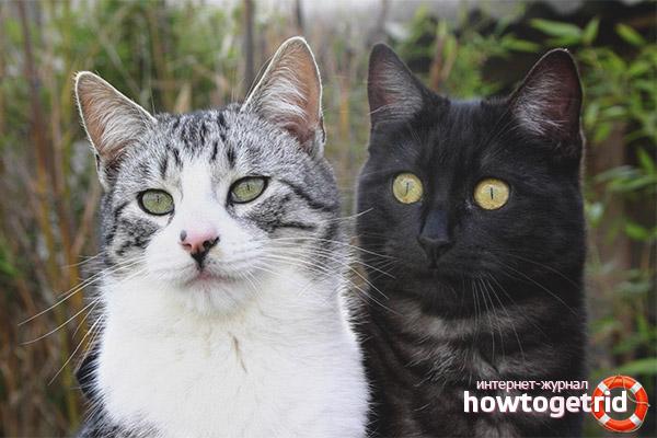 Вязка котов и кошек