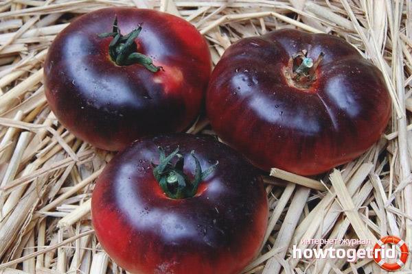 Описание плодов томатов аметистовая драгоценность