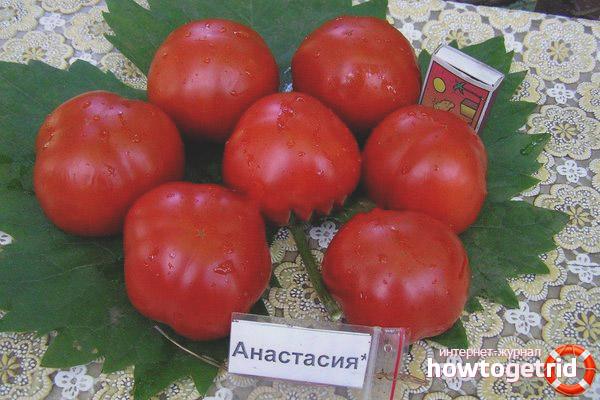 Особенности сорта томатов анастасия