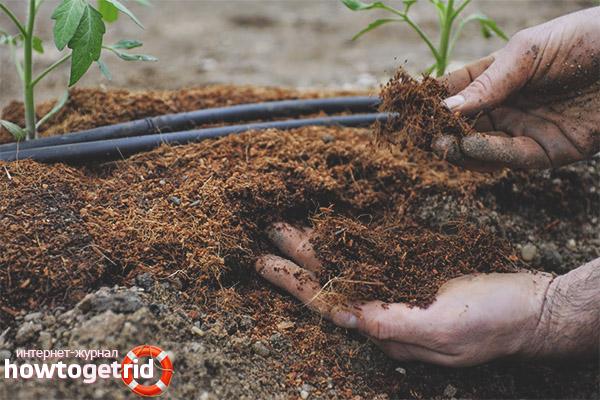 Почва для томатов американский ребристый