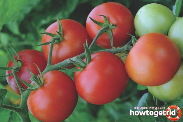 Достоинства и недостатки помидоров сорта Манимейкер