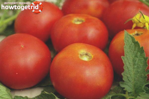 Как выращивать томаты Солярис