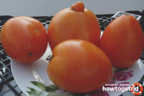 Томат Мармелад оранжевый