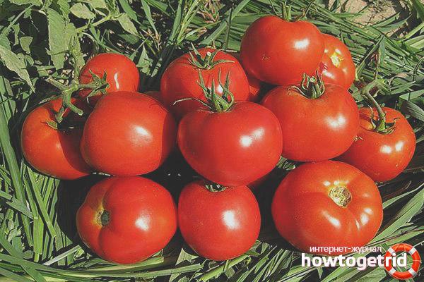 Выращивание томатов Лоджейн F1