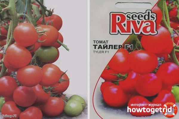 Выращивание томатов Тайлер