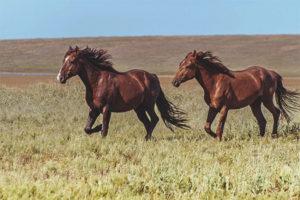 Дикая лошадь