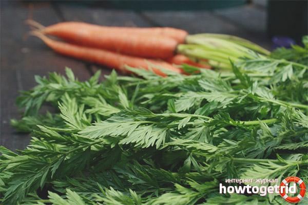 Как применяют морковную ботву