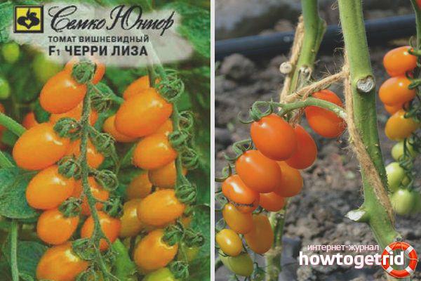 Выращивание томатов Черри Лиза F1