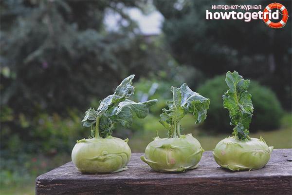 Чем полезна капуста кольраби для здоровья