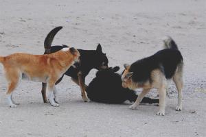 Как избавиться от бродячих собак