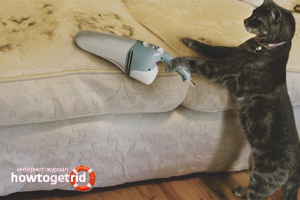 Как избавиться от кошачьей шерсти