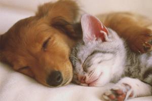 Можно ли кормить собаку кошачьим кормом