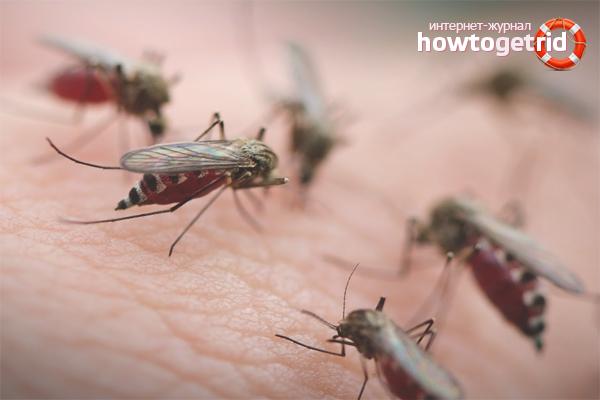Как избавиться от укусов комаров