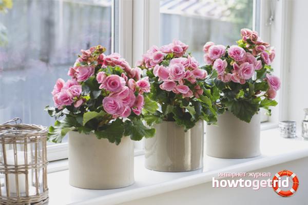 Как организовать полив комнатных цветов во время отпуска